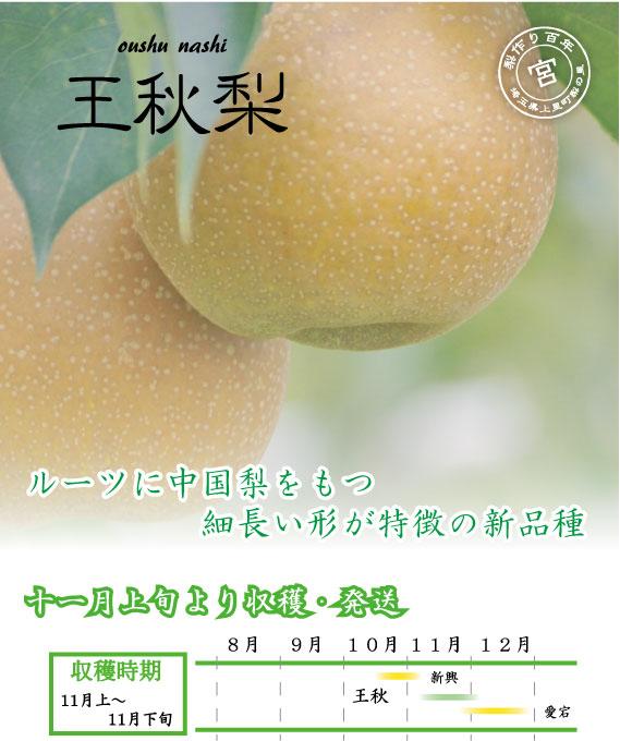王秋梨:中華系新品種