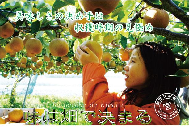 王秋梨:梨の味は畑で決まる