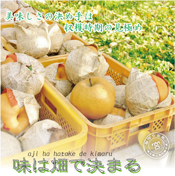 愛宕梨:梨の味は畑で決まる