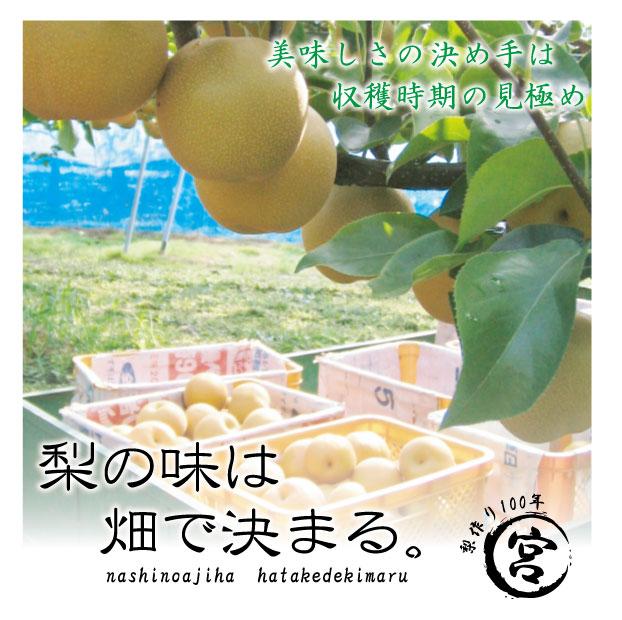 彩玉:美味しさの決め手は収穫時期の見極め