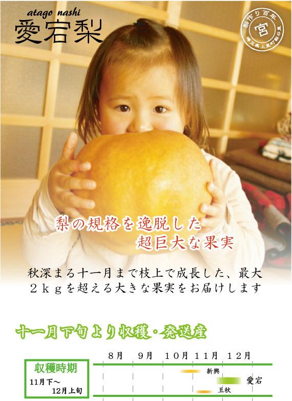 愛宕梨:梨の規格を逸脱した超巨大な果実
