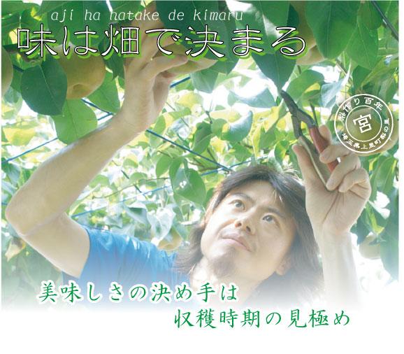 幸水梨-美味しさの決め手は収穫時期の見極め